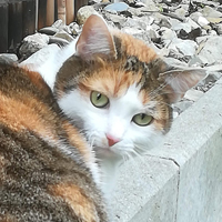 témoignages garde chats Grenoble